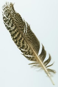 turkey_feather.jpg (1347×2021)