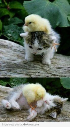 absolutely too much cuteness and flufiness.