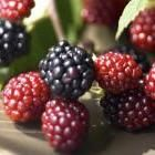 http://www.organicgardening.com/living/12-fruits-and-vegetables-that-last-for-months?page=0,8