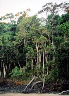 Brazil's Atlantic Forest (Mata Atlântica)