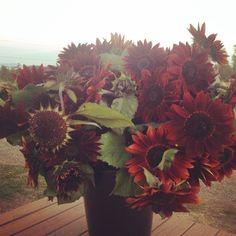 red sunflowers and chocolate sunflowers