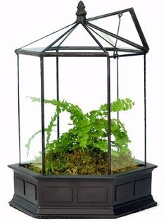 Six Sided English Conservatory Terrarium with Door - Wardian Case - hexagon - for indoor plants / houseplants