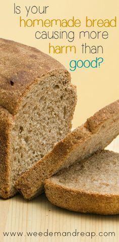 Is your homemade bread causing more harm than good?   yeast   fermentation   sourdough   coconut oil   celiac