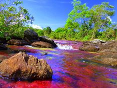 The river of five colours in Colombia. Picture by Martyna Wojciechowska. Darien National Park, National Parks, Mount Roraima, Bolivia Peru, Bioluminescent Bay, Rainbow River, Cocos Island, Lake Titicaca, Iguazu Falls