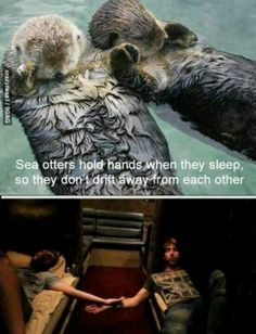 And I thought the otter thing couldn't get any cuter