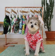 Dogs in clothes. Modern dog. Hawaiian dog shirt. Fashion for dogs by Dog Threads. Stylish dog clothes. Cute dog clothes. Hipster dog clothing. Dog clothing boutique. #cutedogs