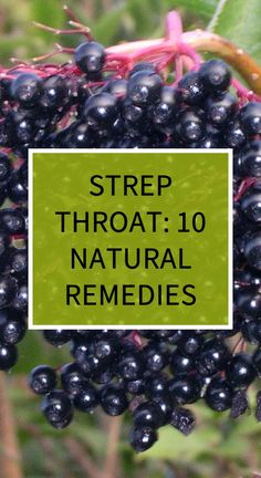 Strep Throat: 10 Natural Remedies - Herbs and Oils Health Goals, Health Matters, Health Tips, Health And Wellness, Health Care, Herbal Cure, Herbal Remedies, Health Remedies, Natural Cold Remedies