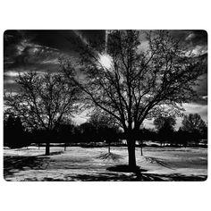 #snowmageddon #snowfall #snow #landscapephotography #blackandwhitephotography #landscape #nature #noir #blizzard2016 #blizzard #trees #photooftheday #virginia #leesburgva #leesburg #idaleepark by peggya