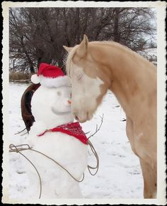 Horse just loves his snowman...or maybe it's the carrot nose (some seems to be missing).