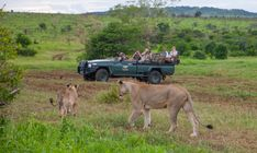 Observing wild lions in a local reserve near Durban. #travel #Africa #safari #wildlife #wild #nature #animals #lions #cats #jeep #KZN Kruger National Park, National Parks, African Holidays, Tropic Of Capricorn, Elephant Park, Kwazulu Natal, Victoria Falls, Game Reserve, Lost City