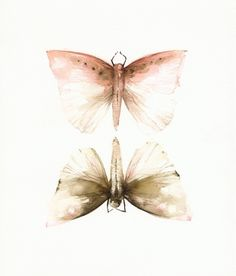 Pink and Mocha MothsPrint of watercolor by amberalexander on Etsy, $20.00
