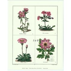 """Art Print By Benjamin Maund Rose Selavy Printed in Italy MD004 Size (8"""" x 10"""") -- $0.50"""