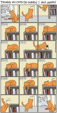 Cat vs. Human - Things My Cats Do When I Am Away