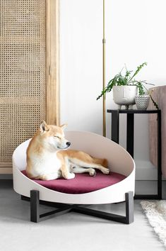 Dog Bedroom, Pallet Dog Beds, Designer Dog Beds, Dog Furniture, Yorkie Dogs, Dog Rooms, Animal House, Pet Beds, Dog Houses