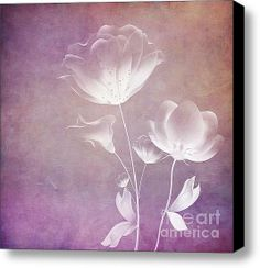 Satin Floral  Stretched Canvas Print / Canvas Art by VIAINA
