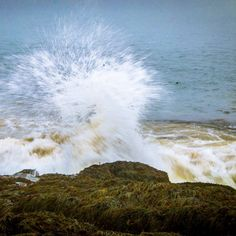 Crashing wave over the rocks near Digby Nova Scotia Canada.  _  We took a Plankton Periwinkles and Predators tour with GAEL Tours. And we stayed at @DigbyPines.  _  Thick fog rolled in while we walked along the seaweed-covered rocks exploring the buzzing life within the tide pools.  Our kids absolutely loved it. Nova Scotia is stunning.  _  What's the coolest thing you've found on a beach?
