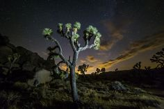 Joshua Tree illuminated during the 30 second exposure  - Check out our B&B Workshops in Joshua Tree. Learn Astro, Landscape & Timelapse Photography in the Park! See you under the Stars!