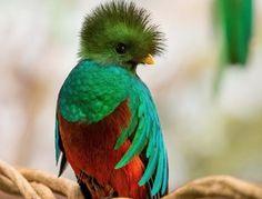 12 Fabulous Animals that Start with The Letter Q Quokka, Angel Fish, The Kingdom Of God, Parrot, Bird, Illustration, Costa Rica, Google, Honduras