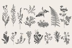 Herbs & Wild Flowers. Set - Illustrations