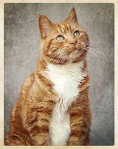 Tim cat