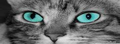 Cat Facebook Covers, Cat FB Covers, Cat Facebook Timeline Covers, Cat Facebook Cover Images