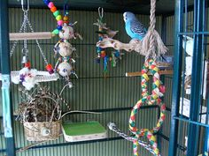 Note the variety of different perches, including a flat perch, available in this parakeet cage.