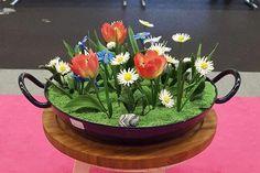 Gänseblümchen, Wiesentulpen, Blaustern und Federnelken