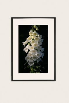 White Floral Foxglove Photography, Monochromatic Art Photogrpahy, Wall Art, Nature Photography, Photograph of White Flowers. for only $25.00