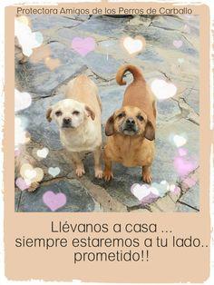 Protectora de Animales Amigos de los perros de Carballo. #adopcion #animales #mascotas #solidaridad protectoracarballo.org