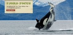 Kenai Fjords Tours. We did the 8-hour tour with dinner on Fox Island. Absolutely stunning trip and one of the best days of my life! We saw Humpback whales and Orcas and Puffins...amazing! A trip to Alaska is not complete without this trip!