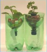 Science experiments: Recycled Soda Bottle Hydroponics: Science Experiments for Kids