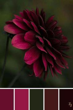 Color palette with a pop pink, red, burgundy on green and black. Color palette with a pop pink, red, burgundy on green and black. Color Schemes Colour Palettes, Red Colour Palette, Color Combos, Green Palette, Red Colour Combination, Monochromatic Color Scheme, Colour Contrast, Pantone, Color Balance
