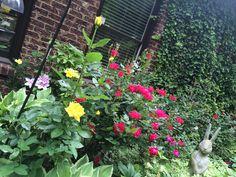 Flowers in my yard.