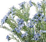 Pioneer Wholesale Company - flowers