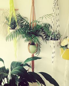 More plant hanger fun! Made by Macrame Adventure