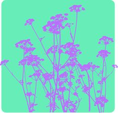 Parsley #vector #print #parsley #Bergfrida