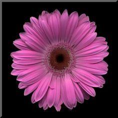 Items similar to Purple Gerbera Daisy Wall Plaque on Etsy Gerber Daisies, Daisy Flowers, Simbolos Tattoo, Flower Drawing Tutorials, Birthday Tattoo, Shell Jewelry, Watercolor Techniques, Wall Plaques, Art World
