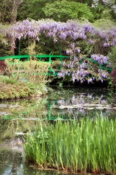 Monet's Garden, Giverny - saw this.  have many many pictures of the garden.