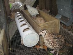 Raising quail.  This feeder is great at preventing waste.