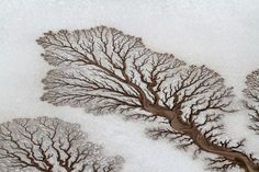 Desert Surface.  What looks like photographs of microscopic moss or trees laid aagainst snow are shots of dried up spiny rivers in Baja California, Mexico.