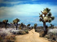 Driving into Joshua Tree Forest for the first time was like driving onto another planet. Amazing...