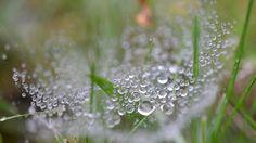 Tröpfchen im Gras nach dem Regen am Morgen.
