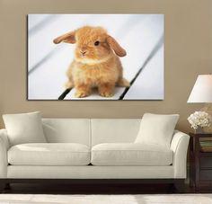 Cute Bunny Rabbit