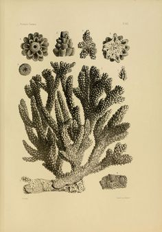 Report on the Florida reefs  Cambridge, Mass. :Printed for the Museum,1880…