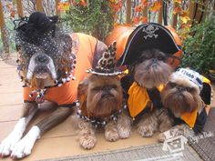 Love the Brussels Griffons in the pic....too cute!