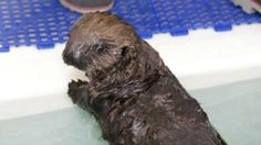 Baby otter! by delia