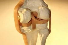 The Best Enzyme Supplement for Ligaments & Tendons