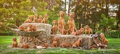 Tcwo dogs and nineteen puppies! Isn't this too much cuteness to handle?! / / Caitlin McColl