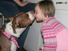 Milkshake is an adoptable American Staffordshire Terrier Dog in Chicago, IL. Milkshake is a sweet, affectionate, and quiet pittie mix who is looking for a loving forever home. Milkshake loves peoples ...