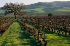 California's other wine countries - Lonely Planet